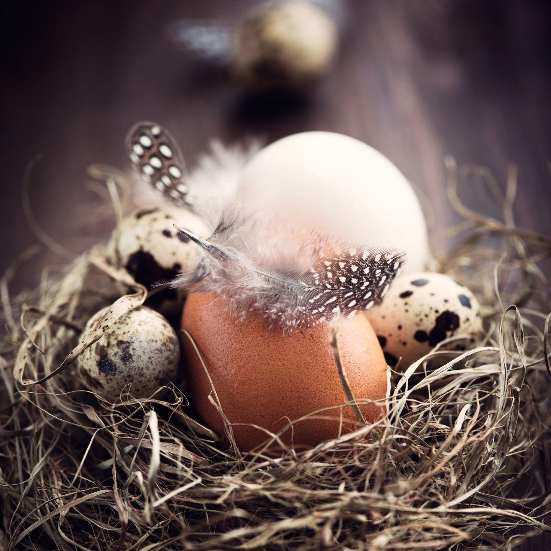 Ostara rituels - blog - Fée'minitude